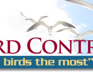 Nation Wide Bird Control